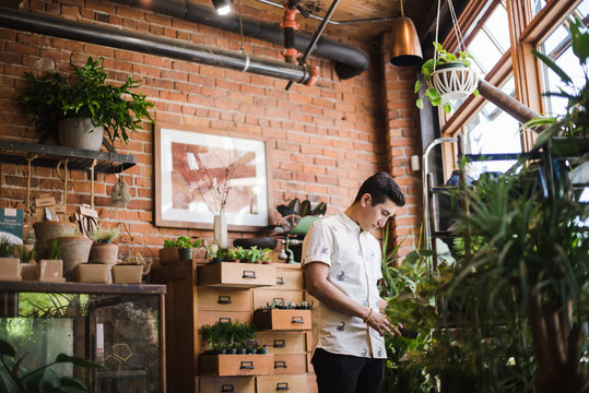 Young man looking at plant in plant shop