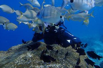 Deurstickers Canarische Eilanden underwater photos of diving in the Atlantic Ocean next to the Canary Islands