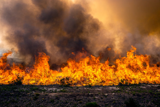 Wildfire flames in landscape
