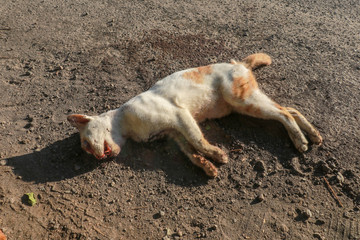 A dead cat knocked down by a means of transport lies by the road. An animal with a brown and white fur coat died by the road. The sun's rays illuminate a four-legged pet.