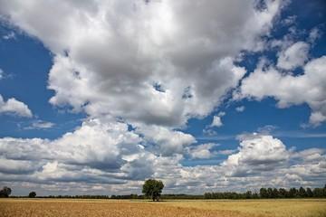 Piękne niebo latem z dojrzałym zbożem na polu