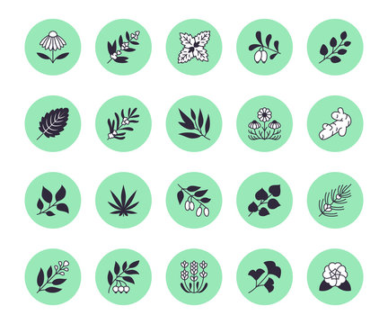 Medical herbs flat line icons. Medicinal plants echinacea, melissa, eucalyptus, goji berry, basil, ginger root, thyme, chamomile. Silhouette signs for herbal medicine