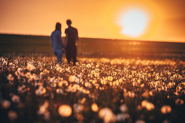 Man and woman walking together on dandelions field. Romantic spring photo, orange colors, sunrise light