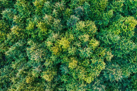 ドローン空撮、森