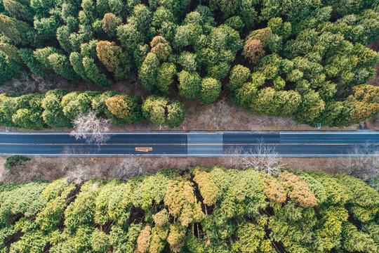 ドローンで撮影したまっすぐな林道