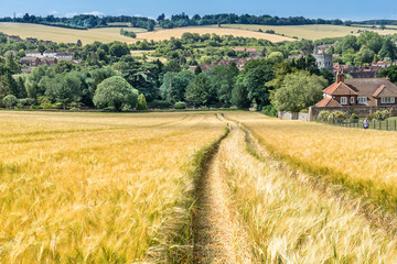 Looking across a Barley field to Old Amersham