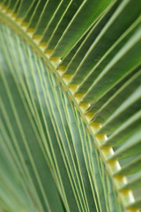 palm tree leaf close up, abstract background
