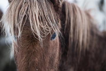 Horse soul.
