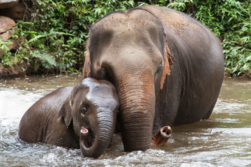 Mother and Baby Elephant Bathing in the River