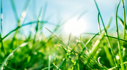 Fresh grass and sunny blue sky on a green field at sunrise, nature of countryside Fototapete