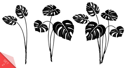 Set of vector monstera leaves isolated on white background. Exotic tropical plants. Design element for card,print, wallpaper,plant shop, travel agency. Contour and silhouette. Black and white.