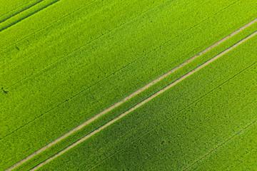 Blick auf ein Getreidefeld von oben