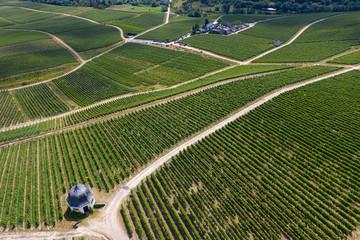 Blick auf die Weinberge bei Rauenthal/Deutschland von oben