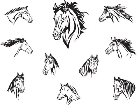 horse, head of a horse, portrait, image, graphics, various options