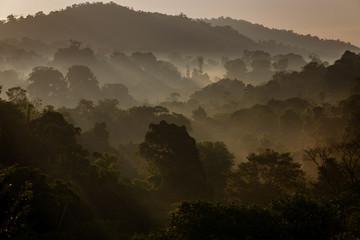 Tropical Rain Forest at Dawn