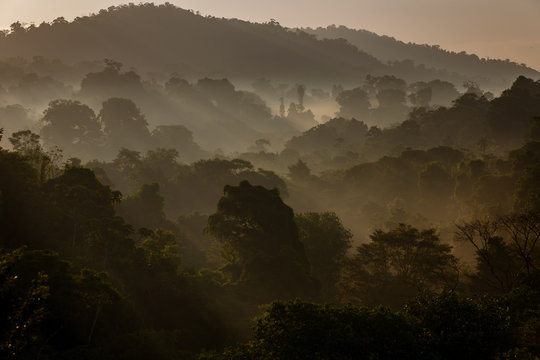 Tropical Rain Forest at Dawn
