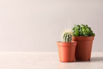 Beautiful succulent plants in pots on table against light pink background, space for text. Home decor
