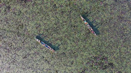 Wall Mural - Aerial view of a boat in red lotus pond at Phatthalung, Thailand.