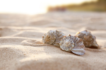 Different seashells on sandy beach. Space for text