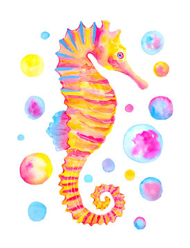 Watercolor pink orange seahorse isolated on white background. Hand painted illustration.