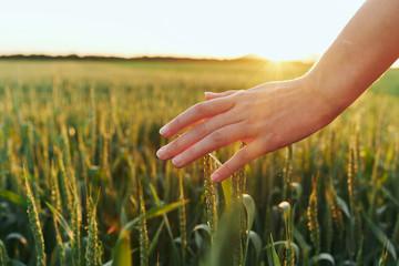 Photo sur Aluminium Pres, Marais hand in field of wheat