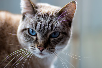 olhar do gato