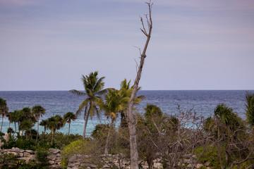 Riviera Maya Landscape