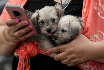 A woman holds her cell phone while carrying puppies in Ciudad Juarez