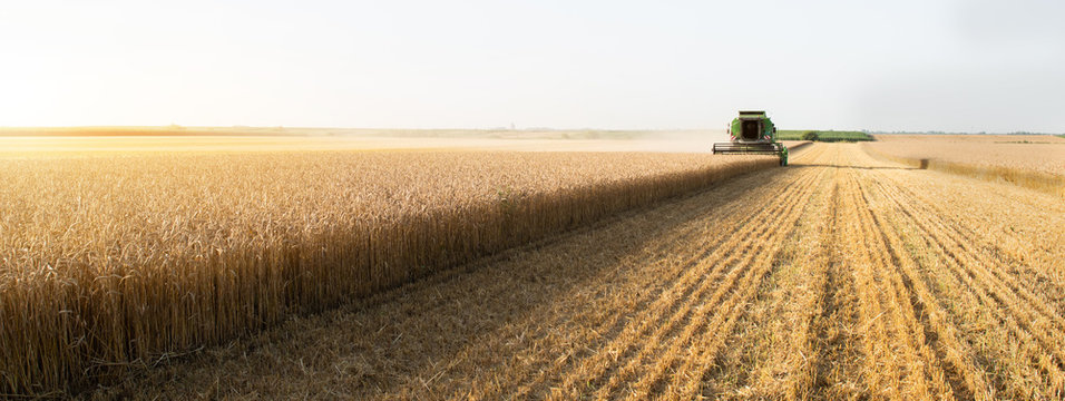 Harvester at work in summer sun