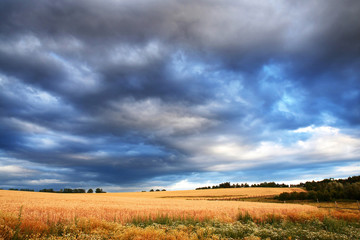 Wheat field with dark storm clouds before rain. Rural landscape in Czech Republic.
