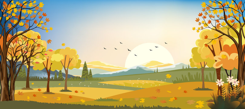 Panorama landscapes of Autumn farm field with maple leaves falling from trees, Fall season in evening.