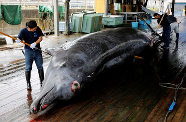 Workers carve into a Baird's Beaked whale at Wada port in Minamiboso