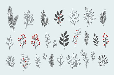 Hand drawn vector winter floral elements. Winter branches and leaves. Hand drawn floral elements. Vintage botanical illustrations.