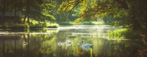 Photo sur Aluminium Cygne beautiful summer morning