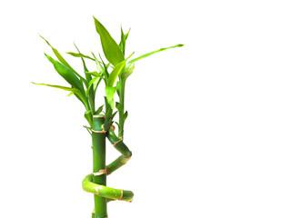 Fresh bamboo shoots isolated on white background