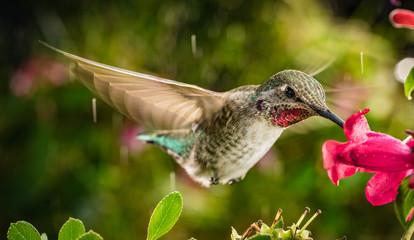 Hummingbird in vibrant natural colors
