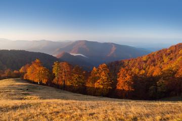 Autocollant pour porte Orange eclat Autumn beech forest in Carpathian Mounatains, Ukraine
