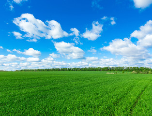 Wall Mural - field of grass and perfect sky