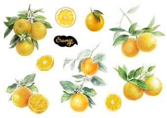 Orange fruits watercolor set hand draw illustration.