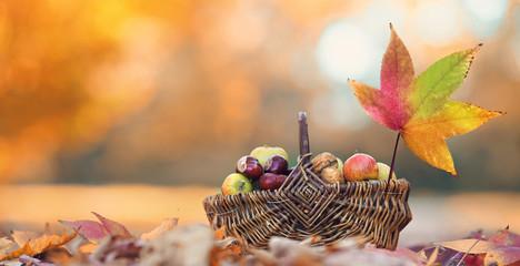 Fotomurales - Korb voll Herbstliches