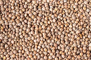 Aluminium Prints Close up brown lentil seeds background. Healthy vegeterian food.