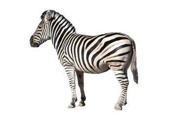 Keuken foto achterwand Zebra zebra isolated on white