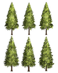 Christmas tree, Pine graphic image 3D Illustration.