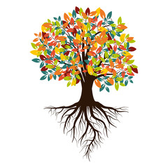 Autumn  tree with colored leaves with roots, Isolated on white background.  Vector