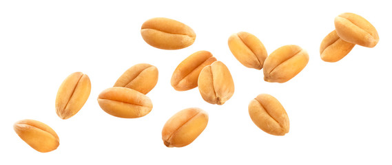 Obraz Wheat grains isolated on white background, close-up - fototapety do salonu