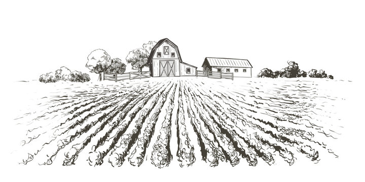 Rural landscape field . Hand drawn vector illustration. Countryside landscape. Engraving style