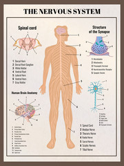 Nervous System Retro Poster