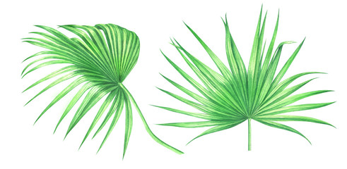 Watercolor palm leaves isolated on white background.