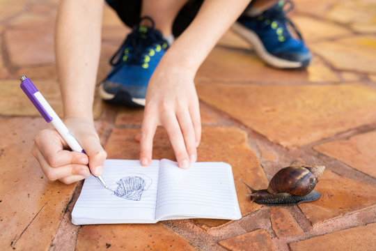 Child sketching giant snail in notebook