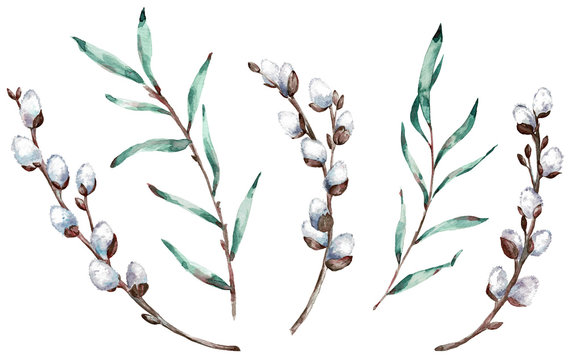 Watercolor clip-art of pussy willow branches. Illustration.